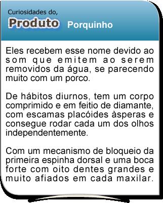curiosidade_porquinho